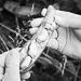 Thumbnail image for Ana Mari Llaguno – vegetable producer