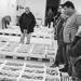 Thumbnail image for Fishermen's union of Porto Santo Stefano