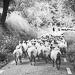 Thumbnail image for Basazabal farm and farmhouse dairy