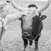 Thumbnail image for Rustici farm
