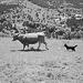 Thumbnail image for Sandra Lejarza – cattle farmer