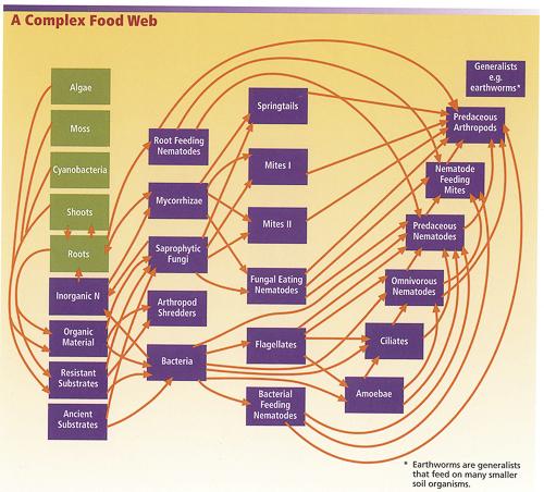 complex_food_web_w500