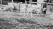 Thumbnail image for Azienda agricola e zootecnica Farina