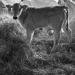 """Thumbnail image for Azienda Agricola Biologica """"La Selva"""""""