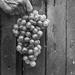 Thumbnail image for Azienda agricola – Agriturismo Monte Argentario