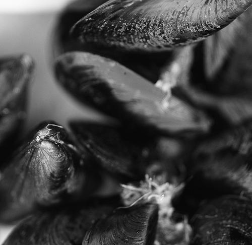 mussels_w500
