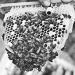 Thumbnail image for Nutripolen beekeepers