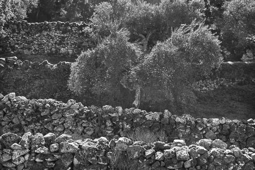 olives_w500