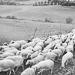 Thumbnail image for Azienda agricola Rosati Cesare