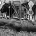 Thumbnail image for Azienda Biologica e Agriturismo Rustici
