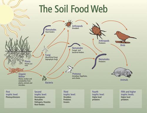 soil_food_web_w500