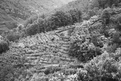 terraces_w500